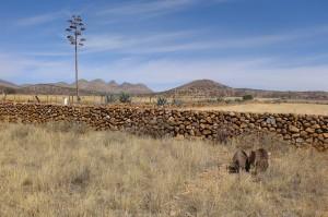 Désert entre Chihuahua et Cuauhtémoc